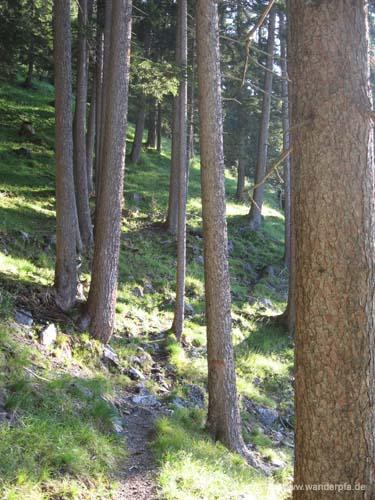 Slalom im Tannenwald